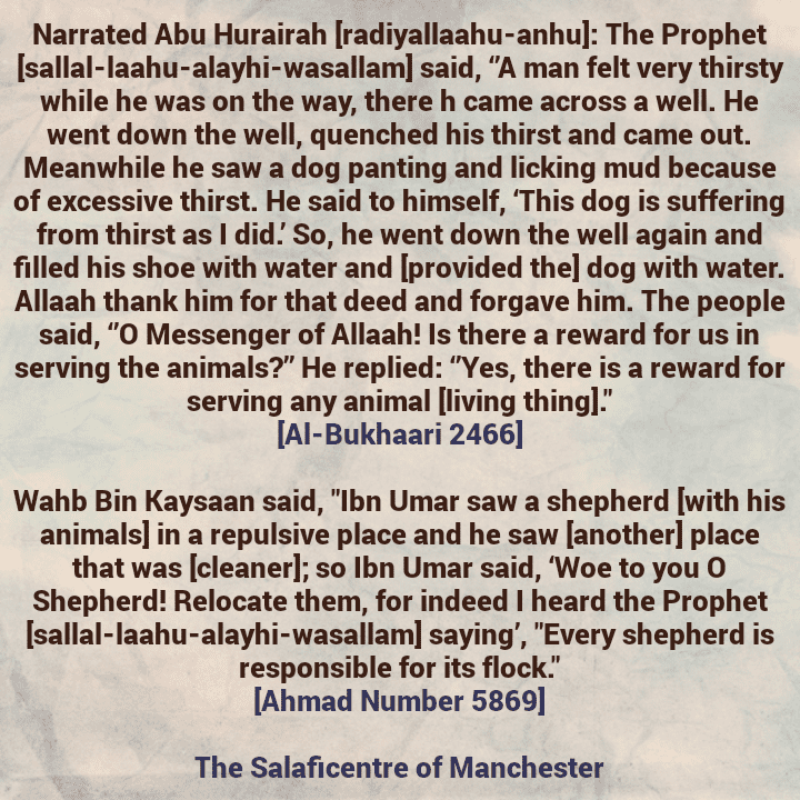 Our Salaf and Kind Treatment towards Animals